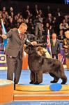 Simon in his prime.. representing Switzerland at the Eukanuba World Challenge
